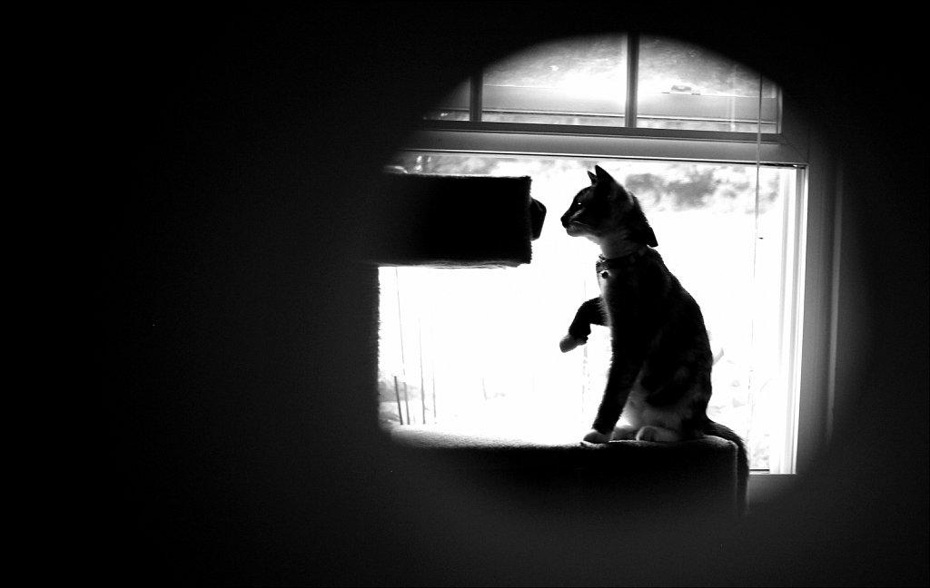 I Spy-Kitty