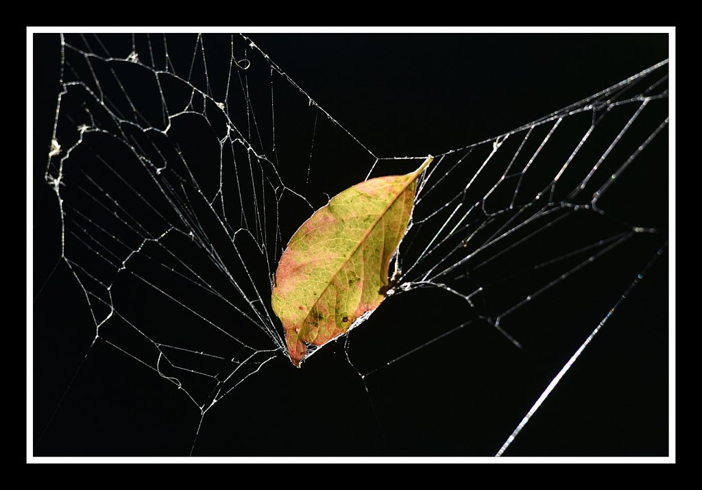 Falling Into the Web