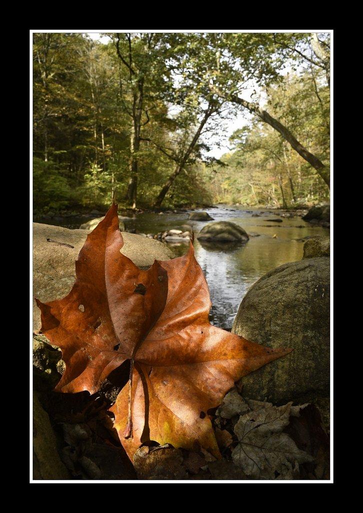 Falling Leaf (28mm)