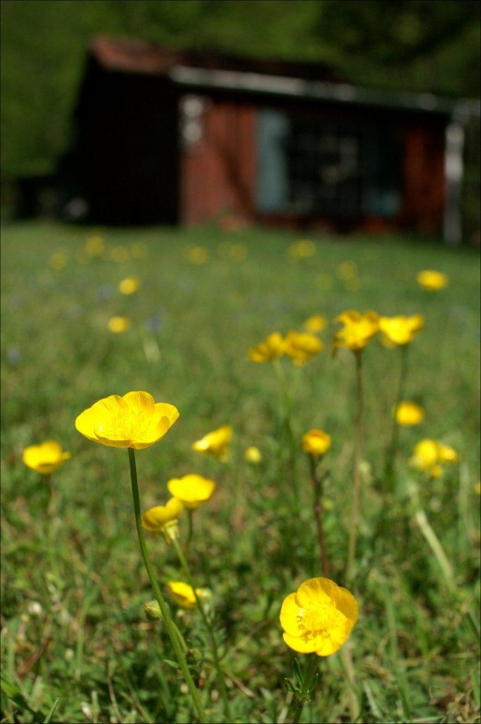 Upstate Spring
