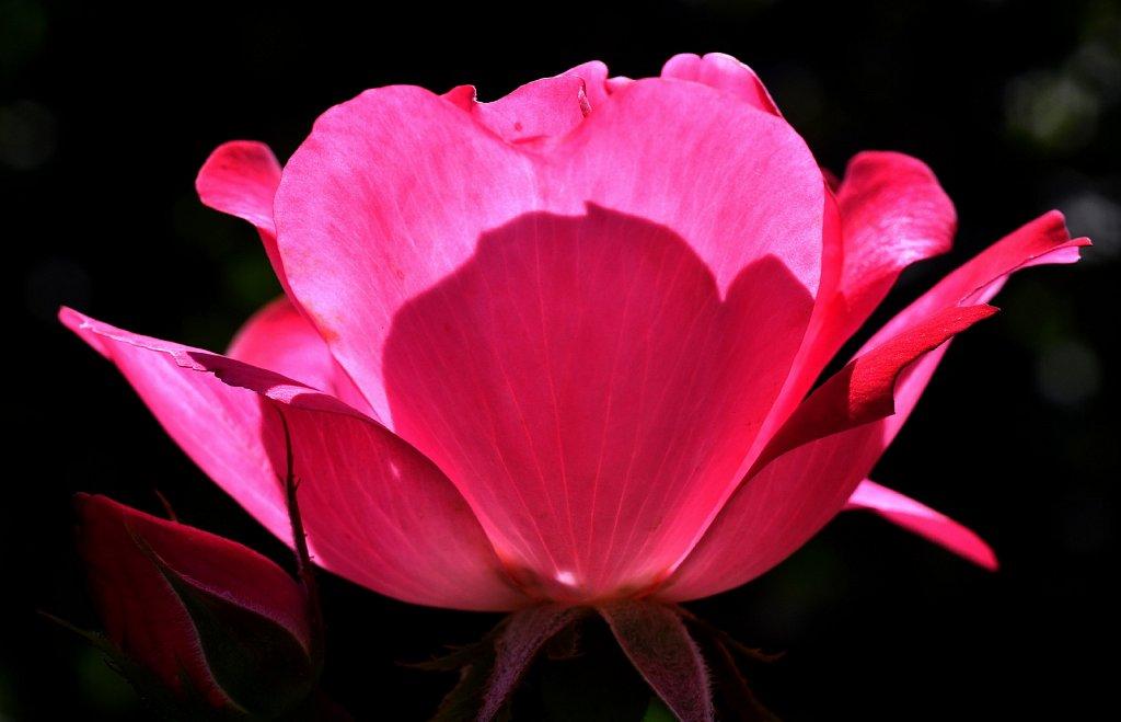 Rose-Bowl-1262-2.jpg