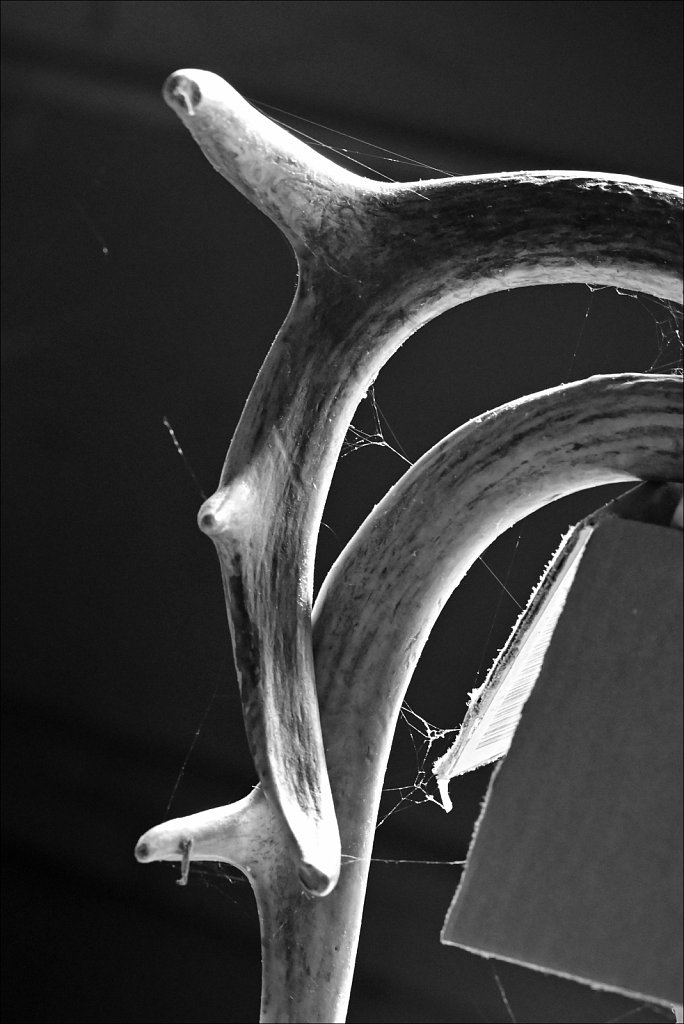 Dusty Antler II