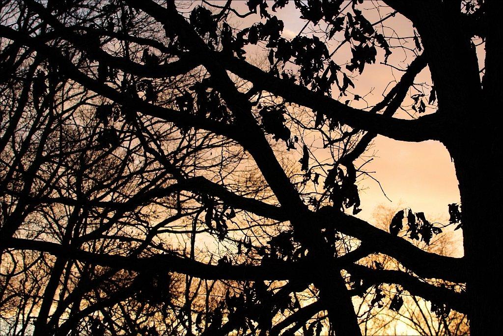 Mount Olive Sunrise