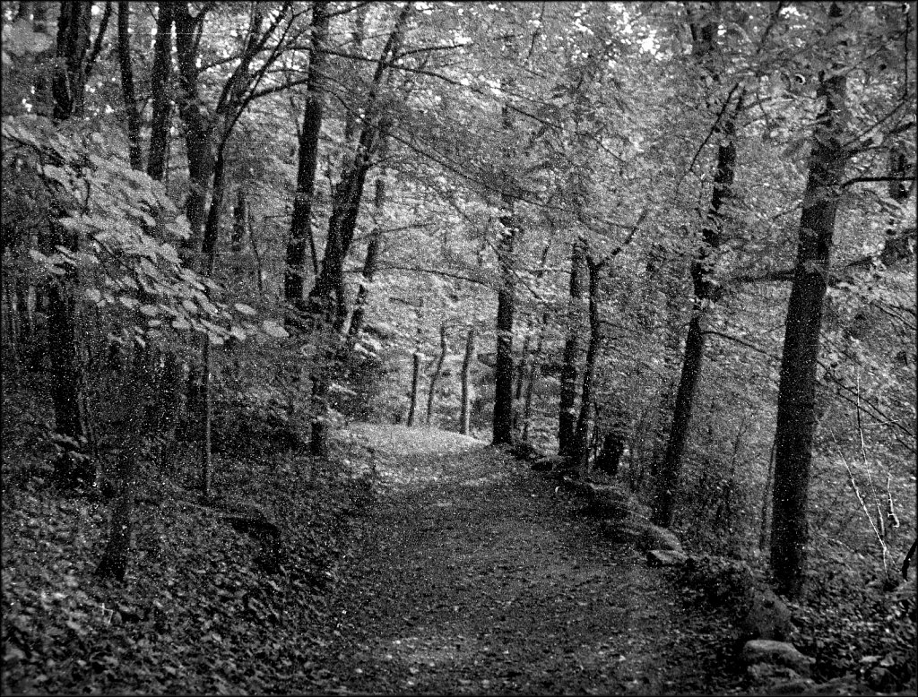 Schooleys Mountain Park