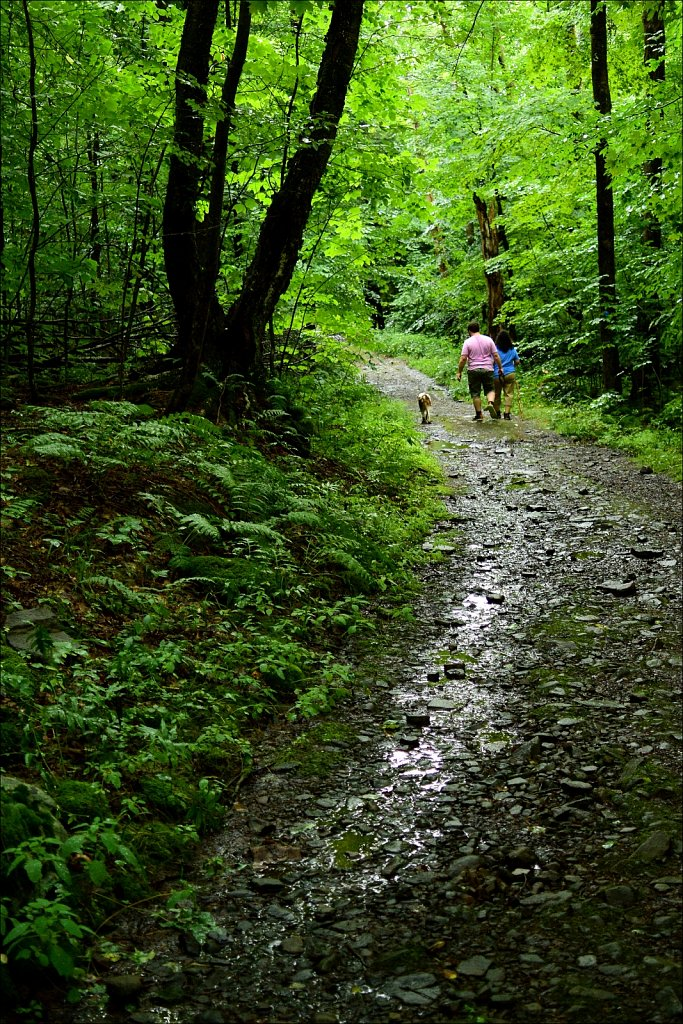 Trail To Trout Pond